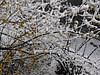2006.2.18杭州雪 001