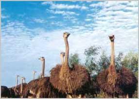 东方鸵鸟观赏园