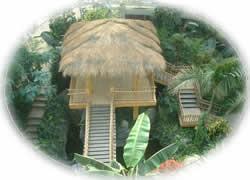 热带雨林区
