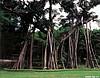西双版纳热带雨林(云南)