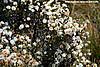 摇篮山野花